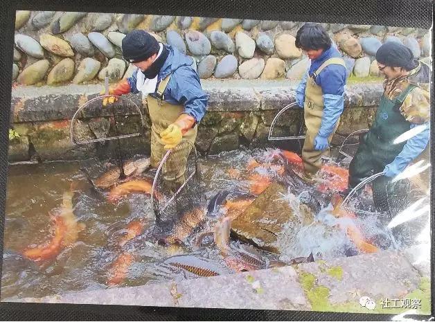 游客服务中心展示锦鲤过冬的过程图片