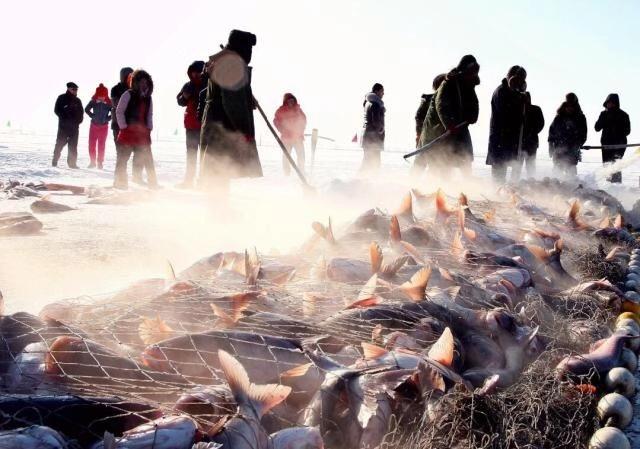 #一城一夏#查干湖都是洗澡鱼?请听国家非遗传人的权威解答,真相显而易见