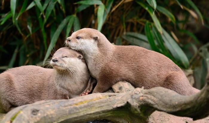 """Win10免费4K壁纸包""""Otters""""发布的照片 - 2"""