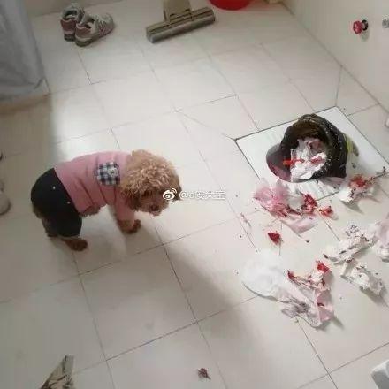 心脏不好的女生,不要养狗!我怕你气出病!