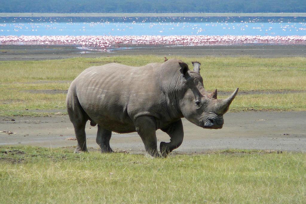 """世界野生动植物大会加强国际贸易制度来应对""""灭绝危机"""""""