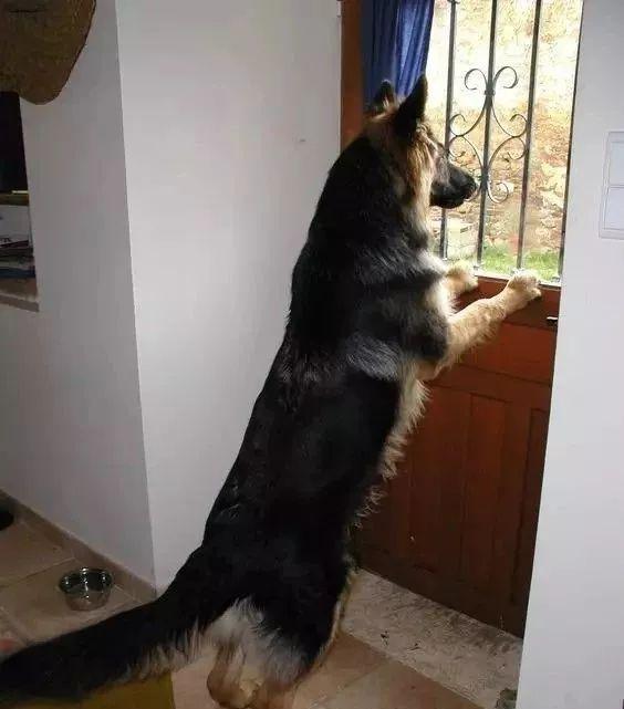 狗是怎样理解离别的?
