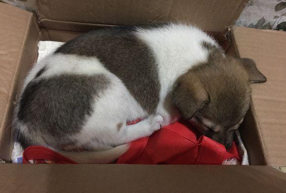 网友捡了一只小狗,看它的样子是被抛弃的,东西挺齐全