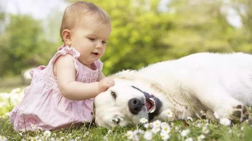 狗狗真的对于小孩特别温柔,总能发生神奇的化学反应