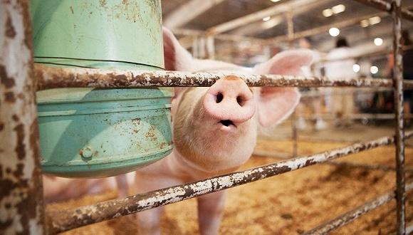 两部门:全面排查以改善环境为由限制养猪业发展或压减生猪产能情况