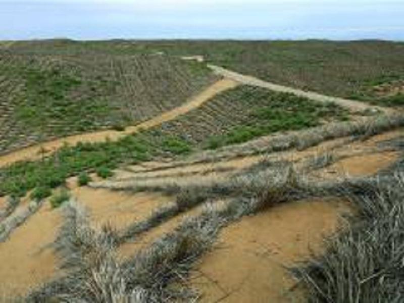 原创中国治沙神器,短短几年让沙漠变绿洲!外国好评如潮,纷纷求合作