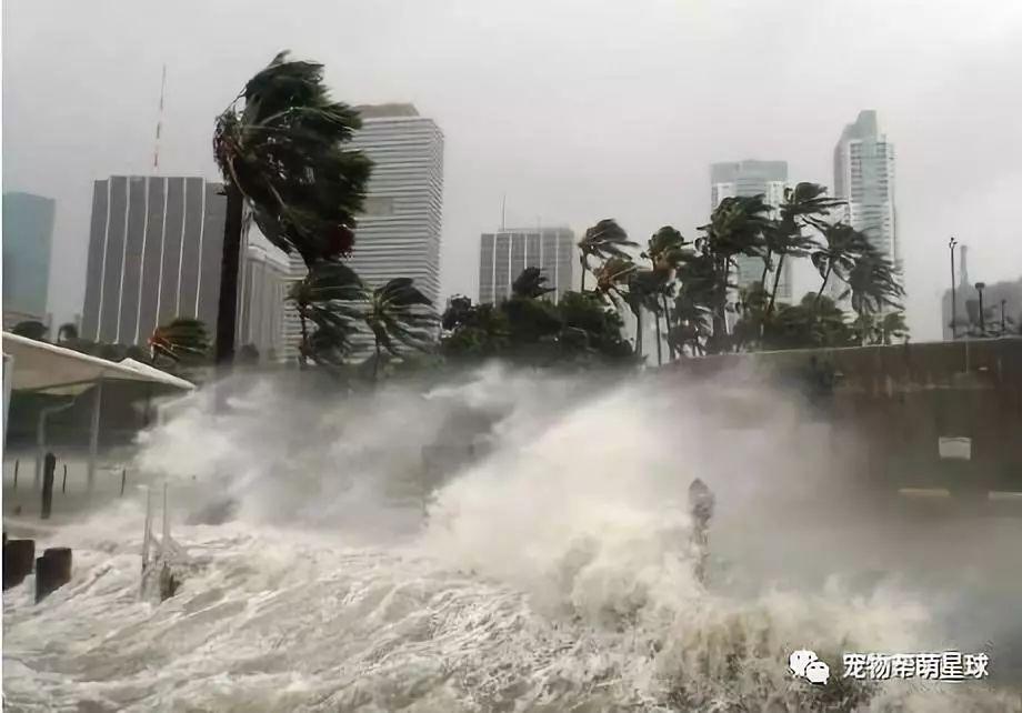 """飓风""""多里安""""来临之际,他不仅帮助小狗度过难关,还霸气收养!"""