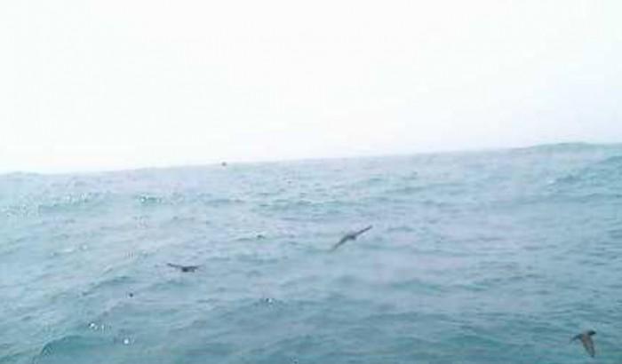 海洋浮标捕捉到被困在多里安飓风眼的鸟群