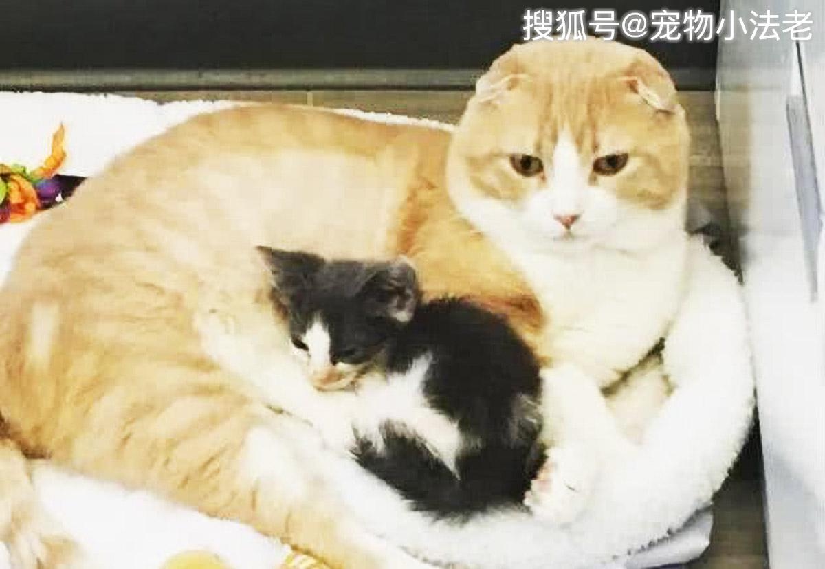 原创医生好心救活1只流浪猫,让他没想到的是,它竟用这种方式报恩!