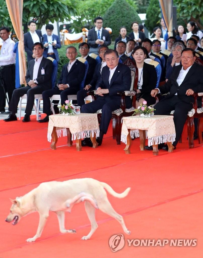韩国老挝领导人正开会神秘白狗大摇大摆走过两人惊讶
