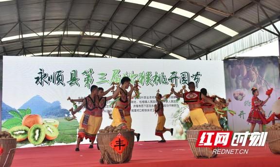 金秋时节好丰收永顺县第三届猕猴桃开园节举行