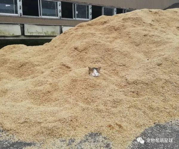 牧场杂物堆里竟埋着谜之猫头...在做沙浴吗xD?