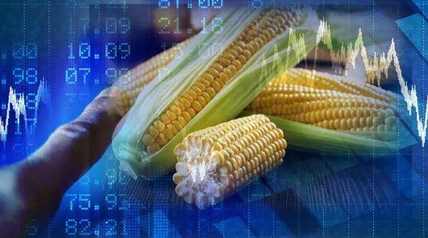 猪周期让玉米坐了趟过山车,临储玉米拍卖遇冷,成交仅4%!加工行业如何应对?