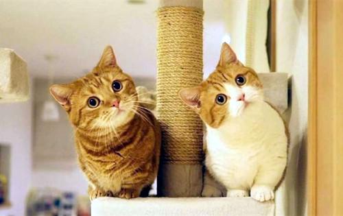原创【奇妙の猫咪物语】母猫尿血问题大么,母猫尿血什么原因引起