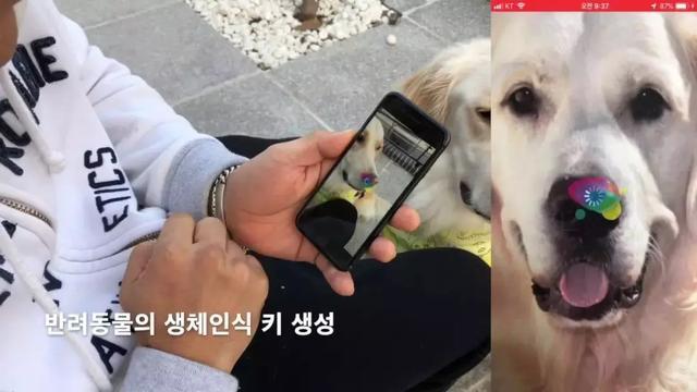 明年韩国宠物市场将达346亿,技术类创业正火