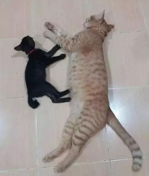 家里养了一只猫的铲屎官,会担心猫咪孤单,给它找玩伴吗?