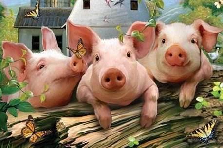 畜牧兽医局:非洲猪瘟咱不怕,恢复生产全靠它