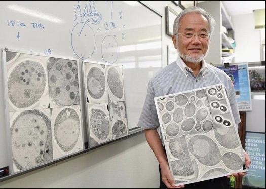 大隅良典与酵母细胞显微镜照片