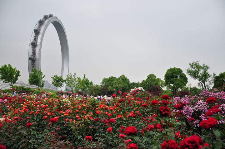 紫荆公园:在东经120度经线上常州最大的月季主题公园
