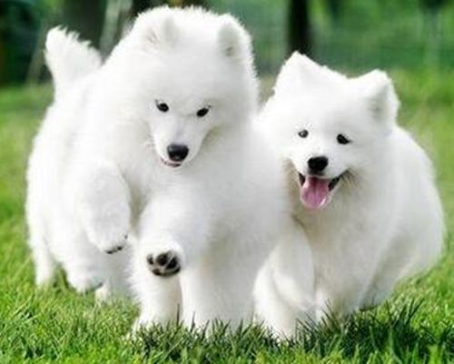 原创幼犬大便一坨一坨的软粘