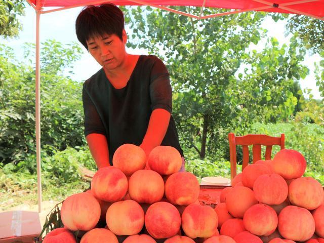 原创农民种植一种果树,果实秋季成熟,20棵收入30000元,有啥秘诀?