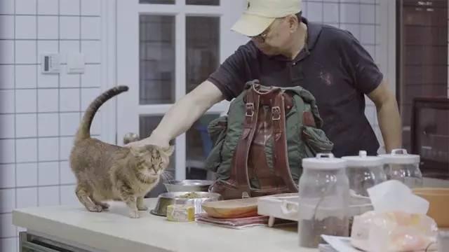 原创62岁的老爷爷骑哈雷喂流浪猫,十年来风雨无阻,前后喂养300余只