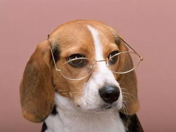 原创狗可以原谅主人几次?