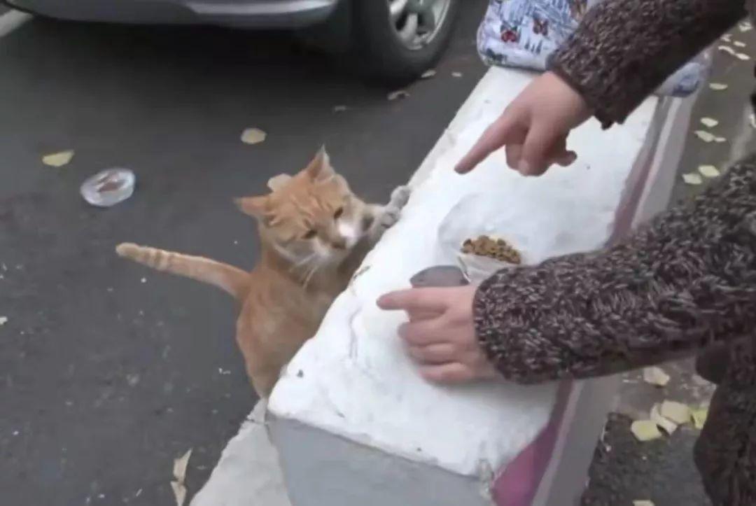 五只小猫只剩一只幸存,猫妈妈却拒绝进食,它的举动让人泪目......