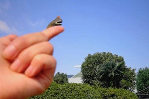 常州中华恐龙园两日游总结的经验分享