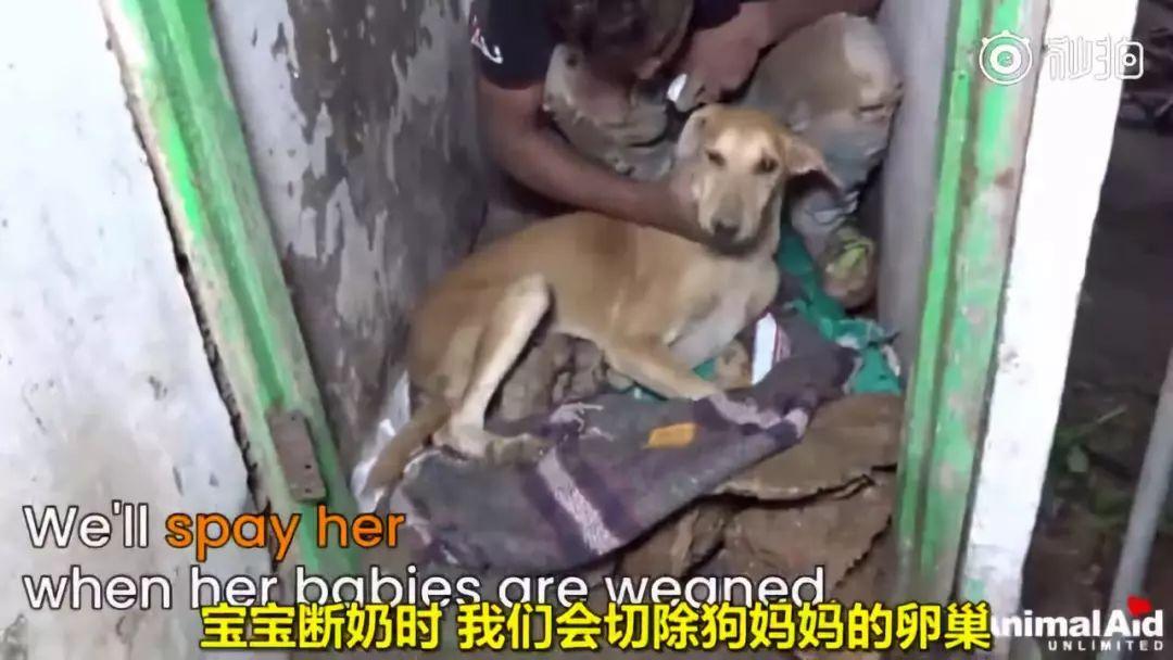 印度水灾后,人们在废墟中发现一只疯狂刨土的狗