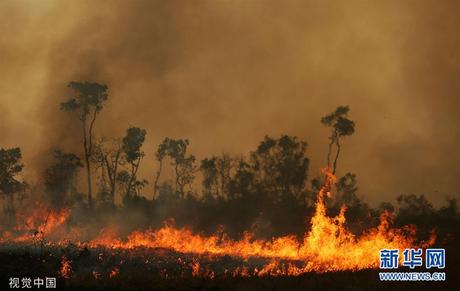 巴西亚马孙州森林火灾持续