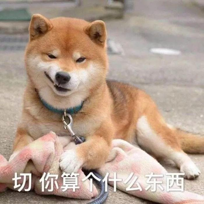 狗对主人这么好,是因为它们本身具有奴性!