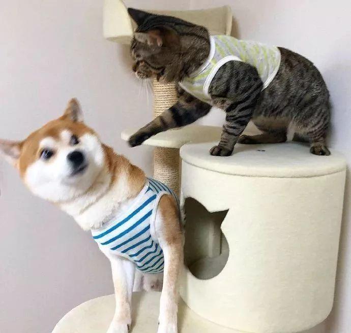 """养了只舔狗柴和高冷猫后,这俩就是传说中的""""没头脑""""和""""不高兴""""!"""