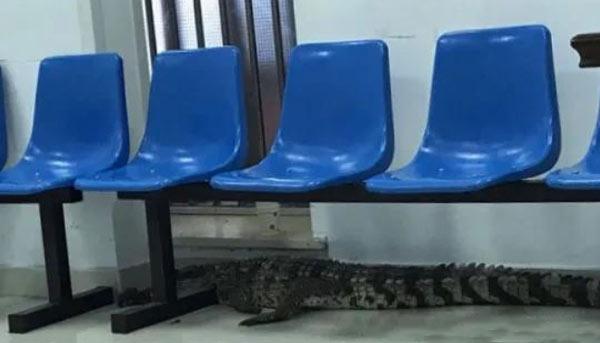 常州一保安凌晨在公园巡逻,突然发现路边一条近2米长鳄鱼