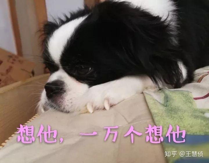 你什么时候发现,狗狗也在爱着你?
