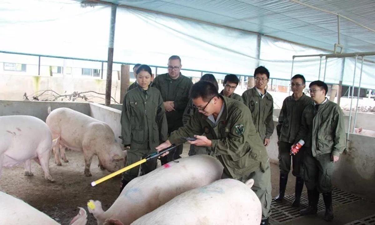 """丁磊的猪要入住""""浙江""""了,""""出栏50万头""""谁都拦不住"""
