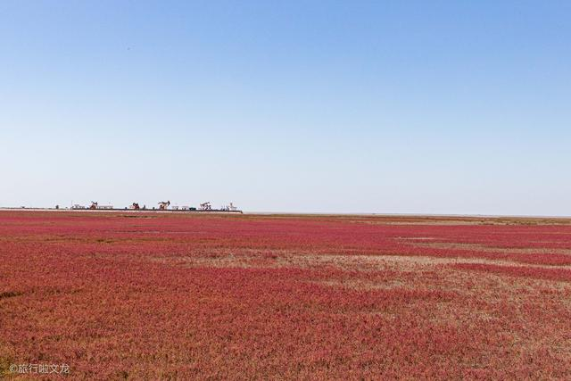 原创航拍辽宁盘锦红海滩,中国十大魅力湿地之一