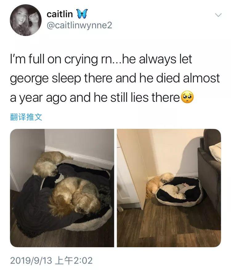好友去世后狗狗每晚守在狗窝旁:说不定哪天你就回来了