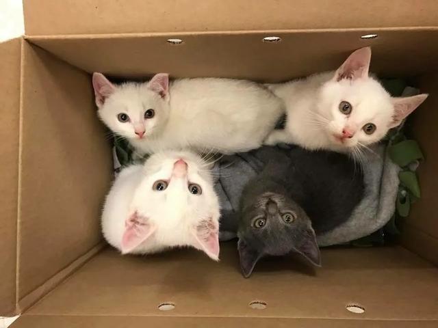原创女孩计划领养2只小猫,结果却多收养了一只,其中的缘由让人感动