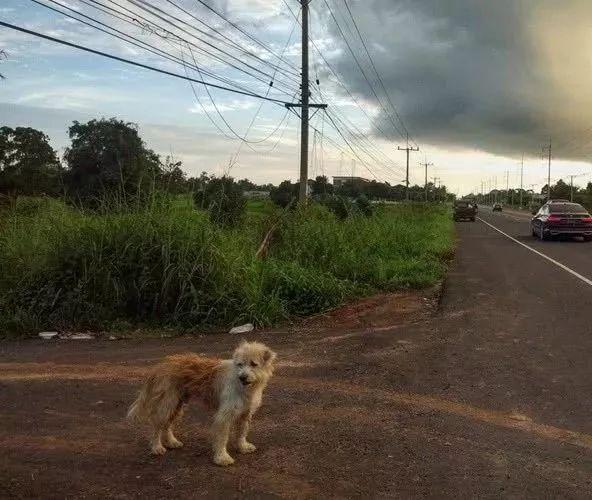 狗狗在公路边苦等主人四年,终于等到的那天,它却不跟主人走了