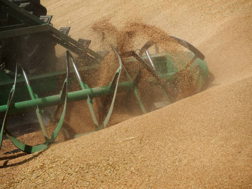 关于购买农产品,中俄又有新动作——