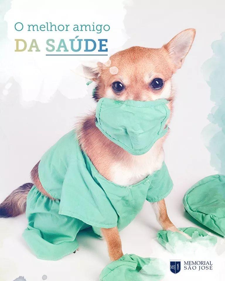 """主人因患上癌症被医生""""判死刑"""",直到他的狗来探病"""