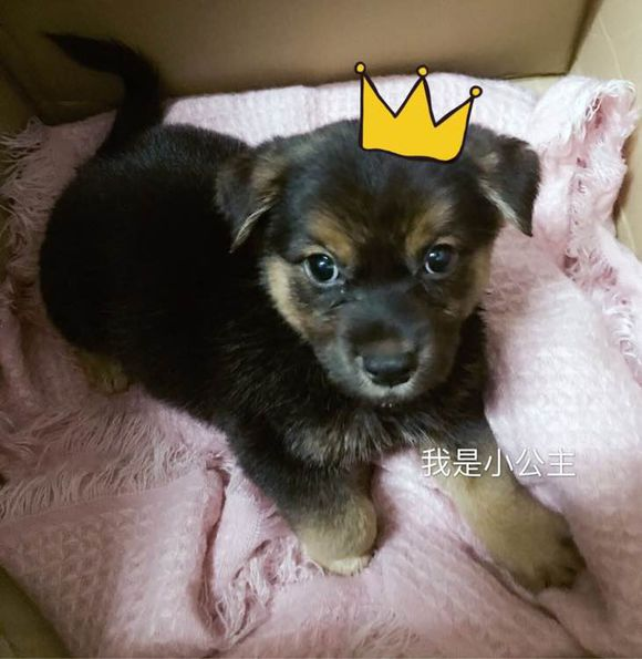 原創早上一開門跑進來一只小狗,長得挺可愛,網友:緣分!