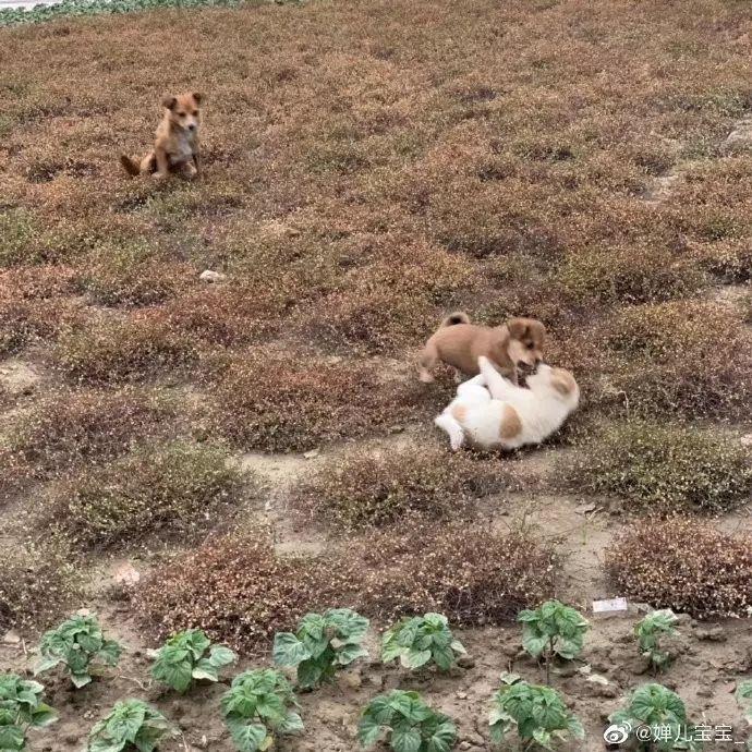 高校内两只流浪小奶狗被人打死,狗妈妈的呜咽声让人心碎