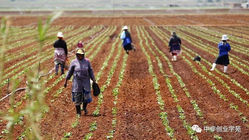 非洲的数字农业化前景到底有多大?