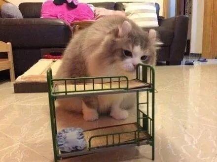 主人在網上給貓咪訂了一張小床,結果寄過來卻是這樣子的···