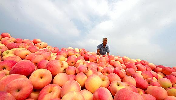 秋收之後水果價格下行明顯,可以大膽買了