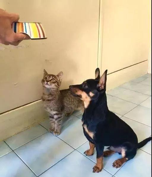 带狗散步遇流浪猫拦路打劫,可狗砸却很兴奋:这是爱上了?