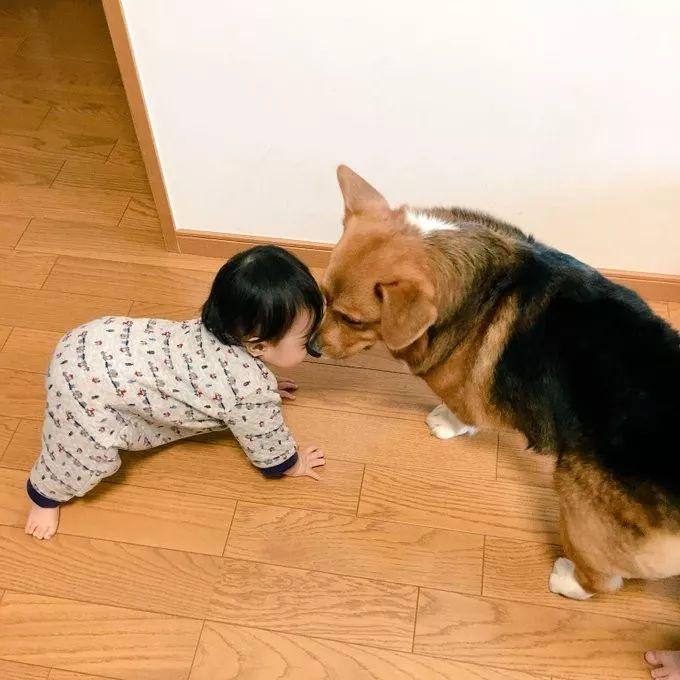 """网友说家里的狗""""护食""""的时候,跟别的狗有点儿不一样"""