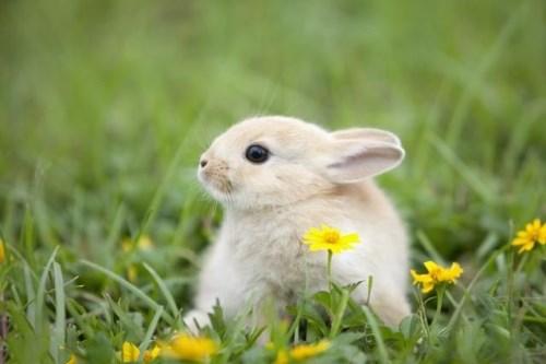 1975年屬兔人2020年運勢女性75兔女今年每月運勢_感情